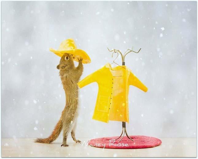 Nancy Rose mókusokról készült fotói