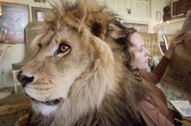 Neil oroszlán