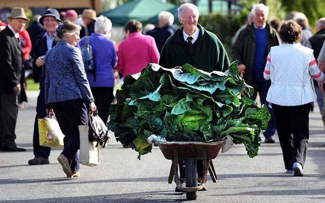 Óriás zöldségek a Harrotage-i Őszi Karneválon
