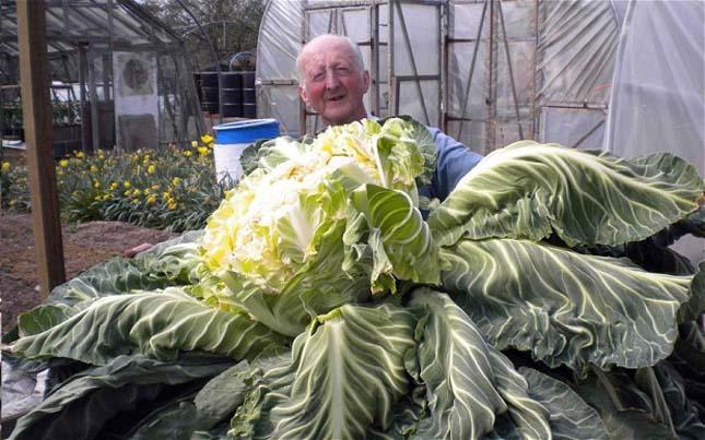 Óriás zöldségek