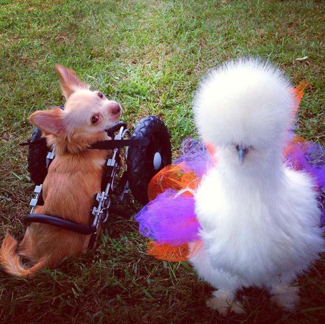 Penny és Roo