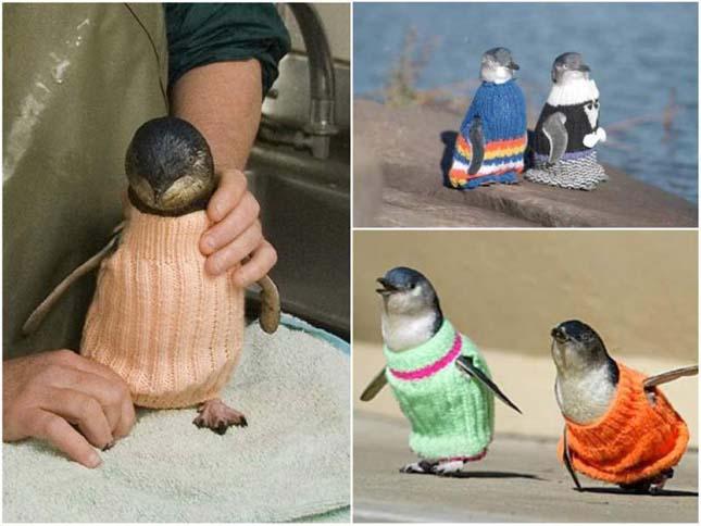 Pingvin ruha