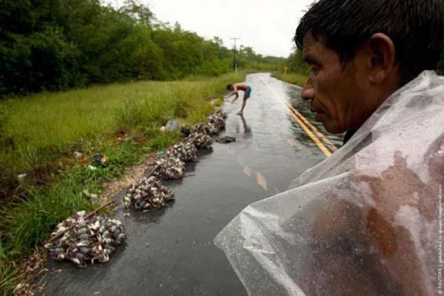 Rákadászat brazíliában