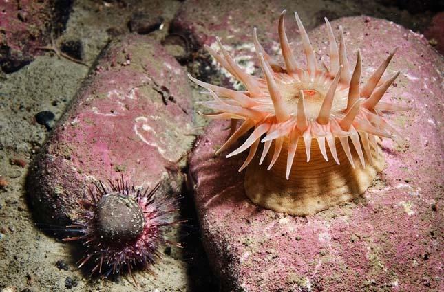 Ritka tengeri élőlények