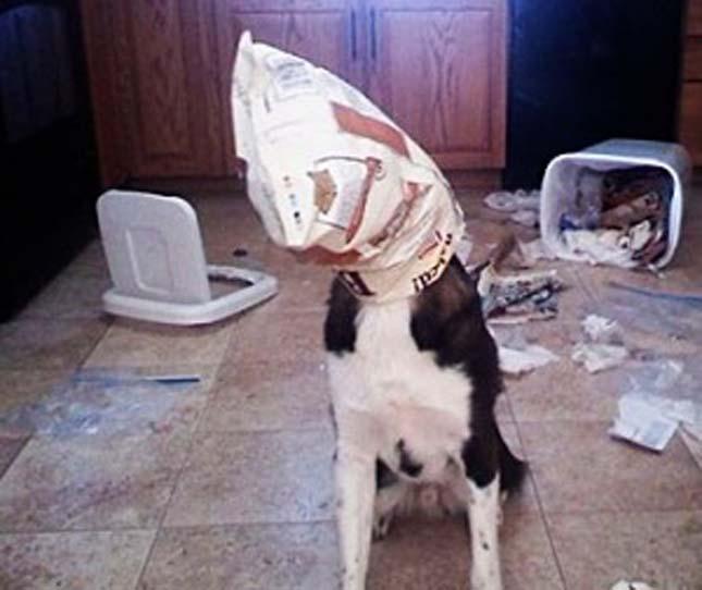 Rosszalkodó kutyák