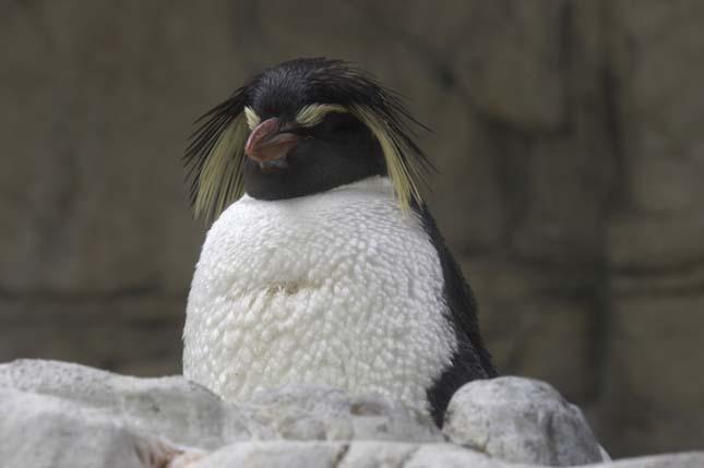 Schönbrunni Állatkert, Európa legjobb állatkertje