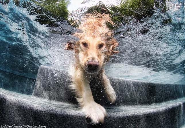 Seth Casteel vízalatti kutyás képei