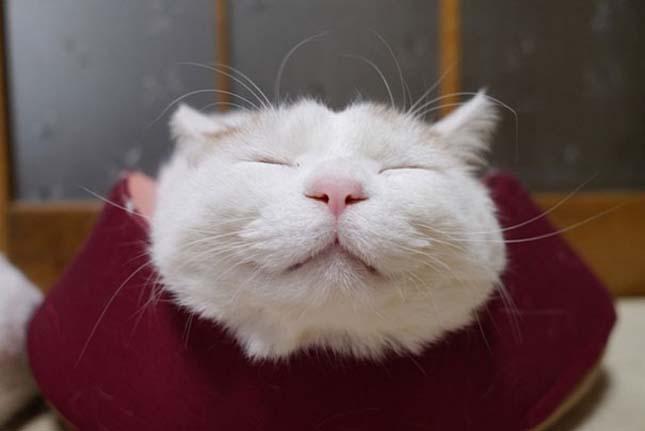 A legvidámabb és leglustább macska