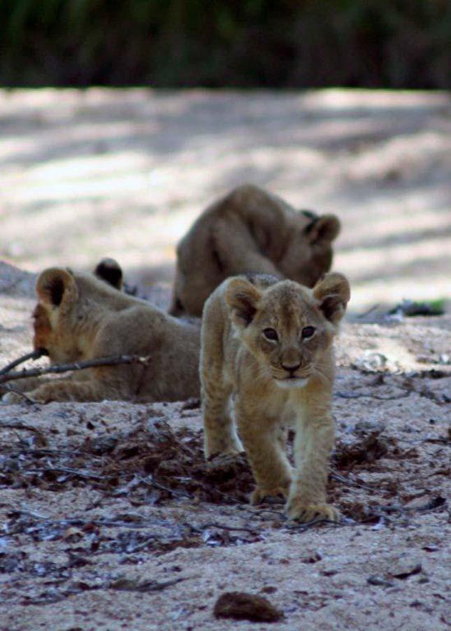 Singita Sabi Sand, Dél-Afrika
