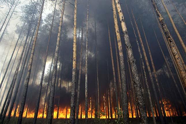 Csernobili erdő