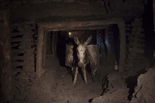 Szamarak az afganisztáni bányákban