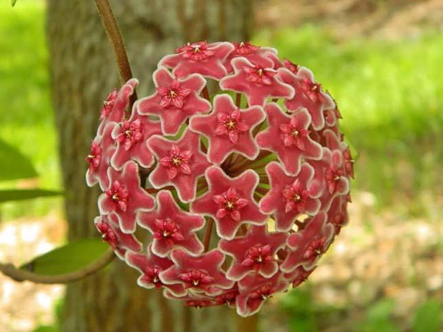 Szimmetrikus növények