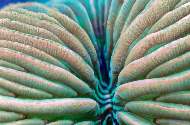Korallok