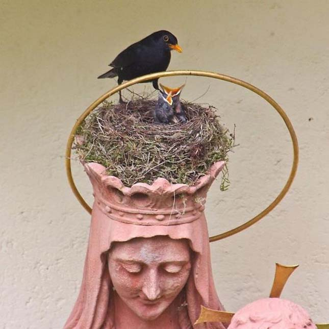 Szokatlan helyeken épült madárfészkek