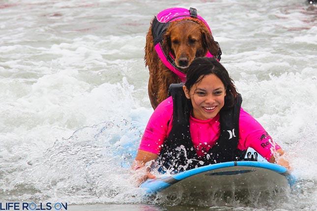 Ricochet, a szörföző kutya