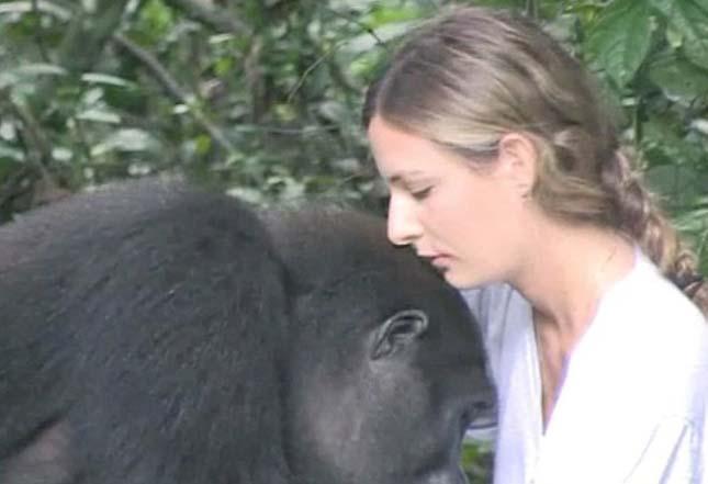 Tansy Aspinall és a gorillák