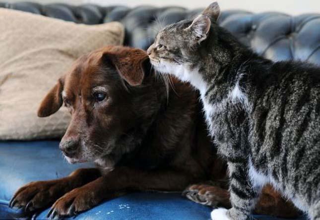 Macska vezeti a vak kutyát