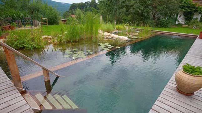Természetes kerti medencék