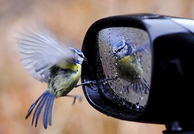 Tökéletesen időzített állati fotók