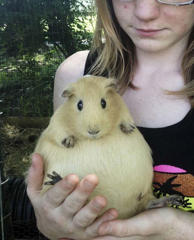 Terhes állatok