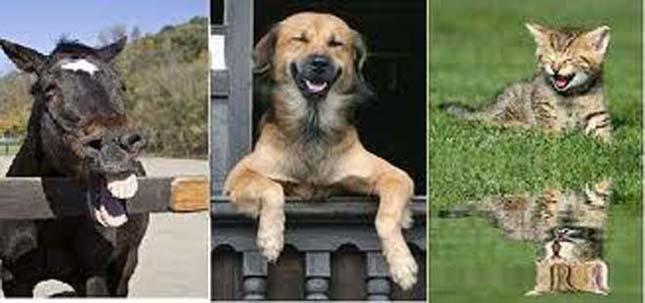 Vidám, nevető állatok