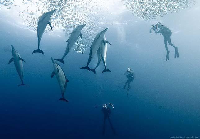 Alexander Safonov víz alatti fotói