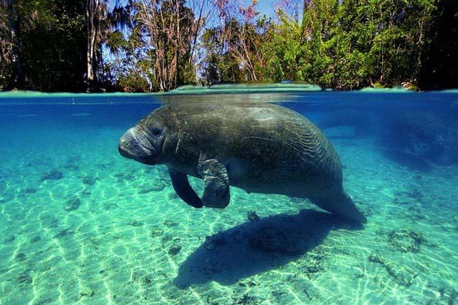 Víz alatti felvételek