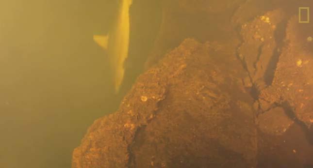 Cápákat találtak egy víz alatti vulkánban