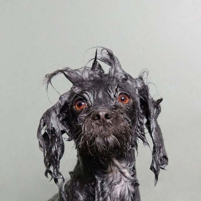 Kutyák fürdetés után