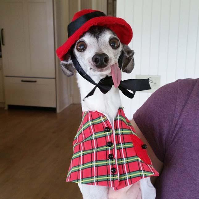 Zappa kutya