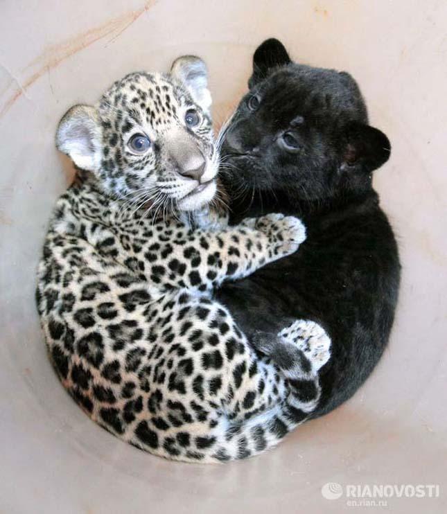 Szentpétervár új állatkertje