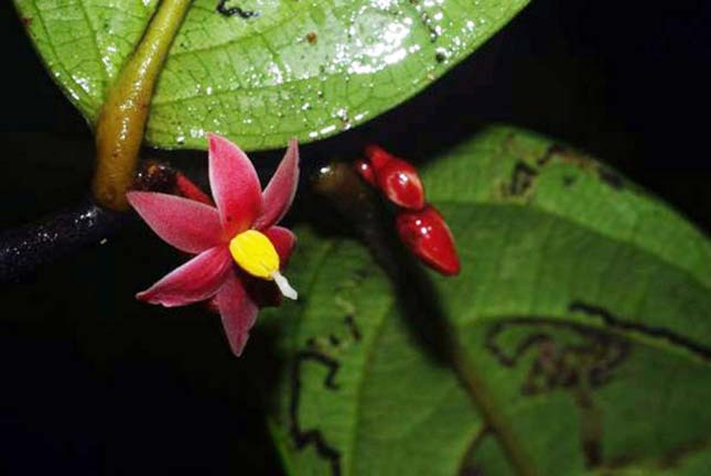 10 új faj