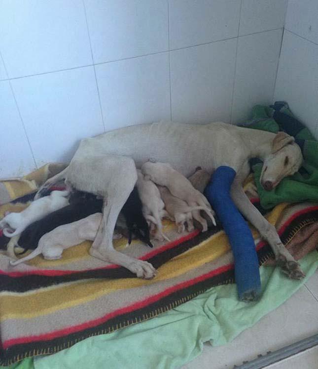 Elvezette kölykeihez az állatorvost a törött lábú kutya