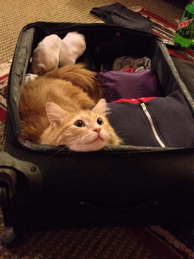 Állatok a bőröndben