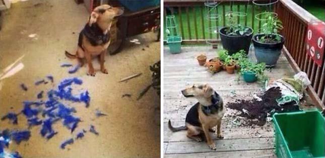 Ezeket az állatokat nem kellett volna egyedül otthon hagyni