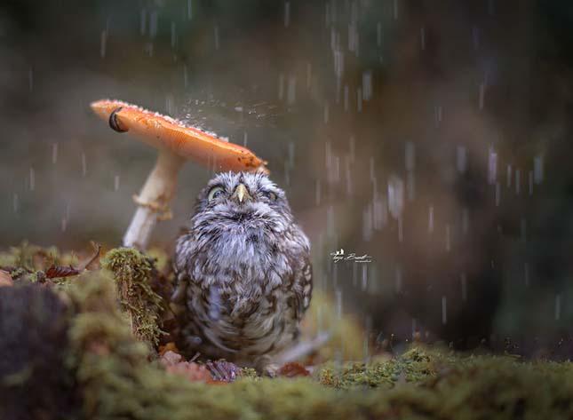 Esernyős állatok