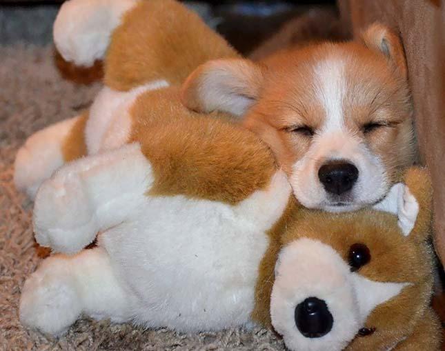 Állatok kedvenc plüssjátékaikkal