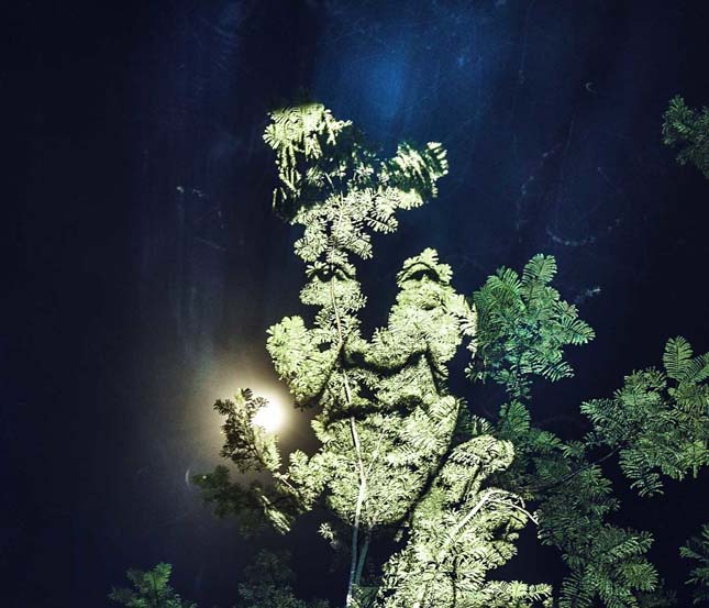 Amazonasi fényfestés