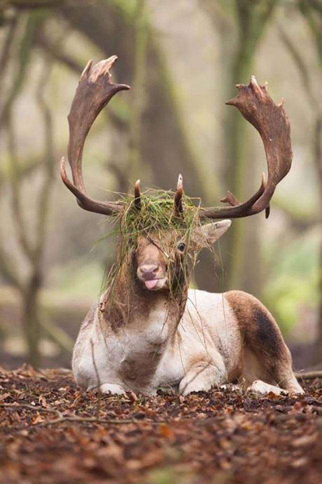 Antifotogén állatok