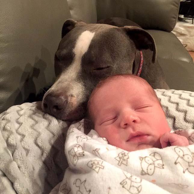 Együtt vigyáznak a család állatai a kisbabára
