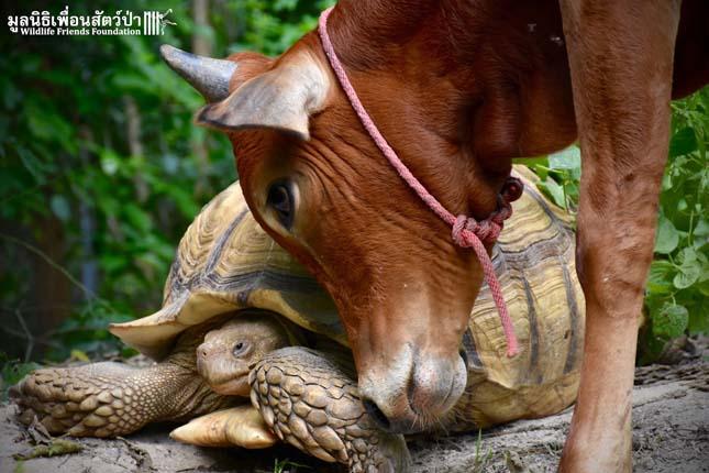 Teknős lett a boci legjobb barátja