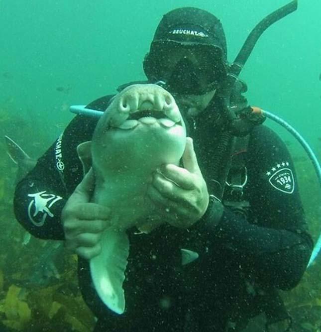 Cápával barátkozott össze a búvár