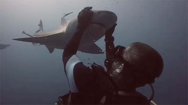 A cápa és a búvár barátsága