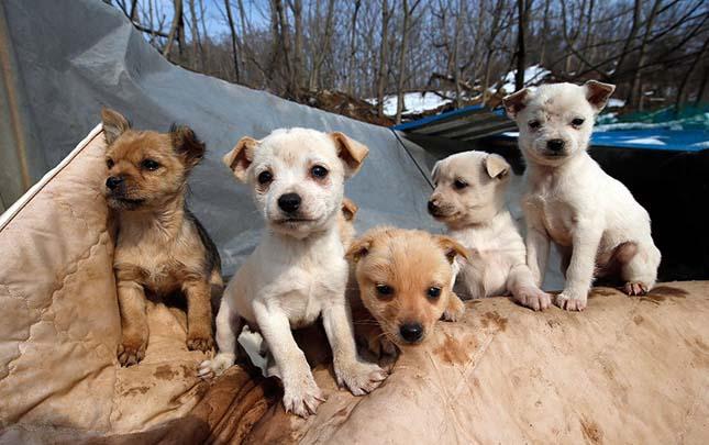 kétszáz kutyát mentett meg a biztos haláltól egy dél-korai nő
