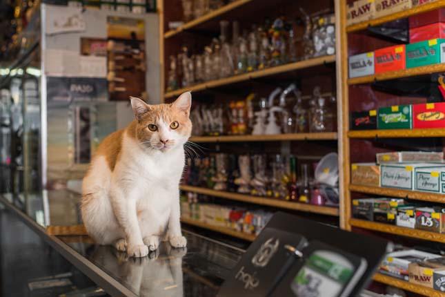 New York dolgozó macskái