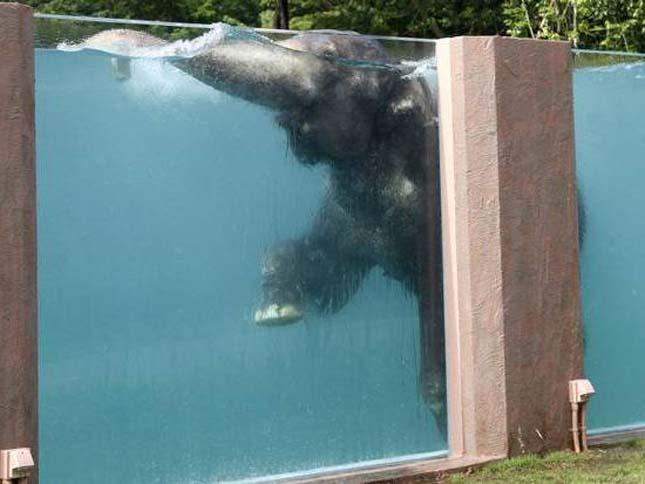 Elefánt medence
