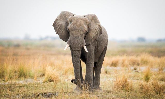 Elefántcsont