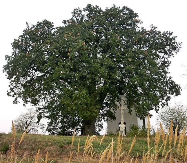 A fák is alszanak