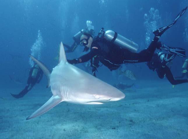 Több ezer cápa a magasból