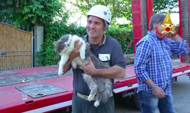 32 nappal a földrengés után élve találtak meg egy macskát